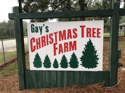 Gay's Christmas Tree Farm