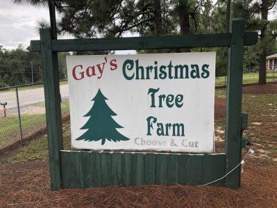 Gay's Christmas Tree Farm