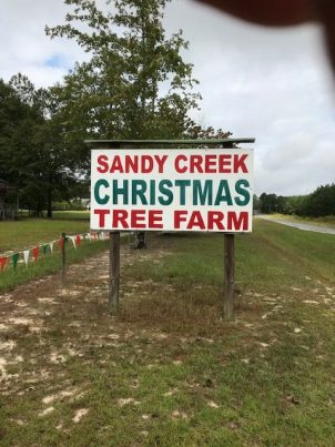 Sandy Creek Christmas Tree Farm