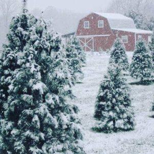 Worthington Tree Farm